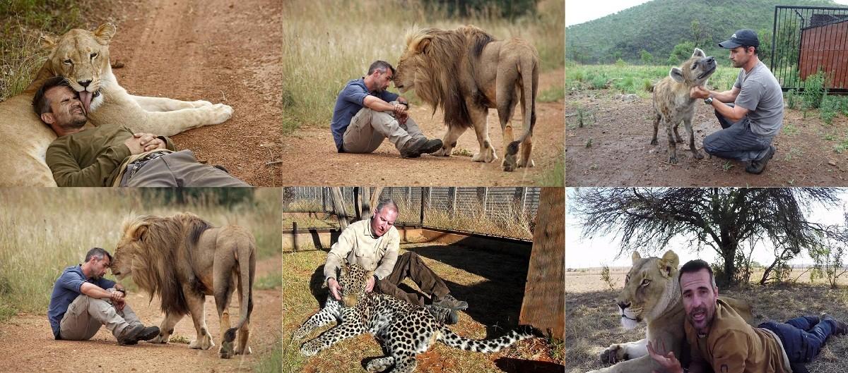 جينات تحول الأسود والنمور والضباع إلى حيوانات أليفة