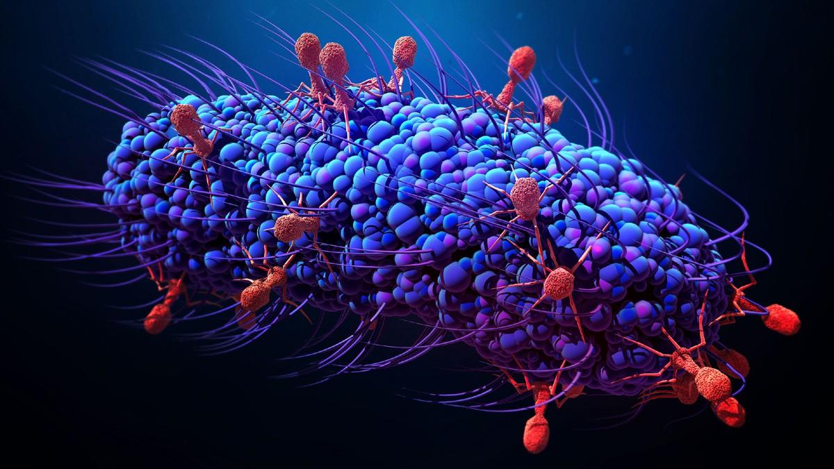 Cعالم الفيروسات.. أول من استوطن الأرض والأقل خطرًا على الإنسان
