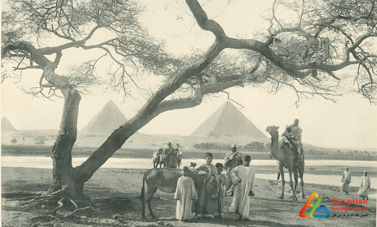 CWhen the Nile was up to the pyramids 160 years ago